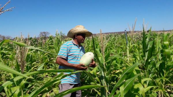 Acompanhamento técnico à Comunidade Angical - Colônia do Piauí